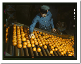 Sorting Oranges / Photographer: Jack Delano